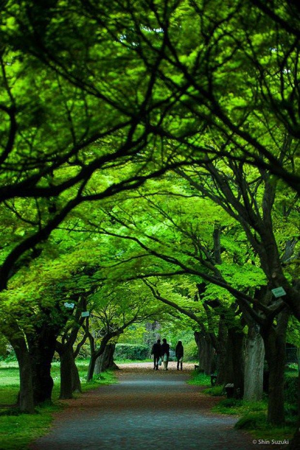 Koishikawa Botanical Gardens in Tokyo, Japan