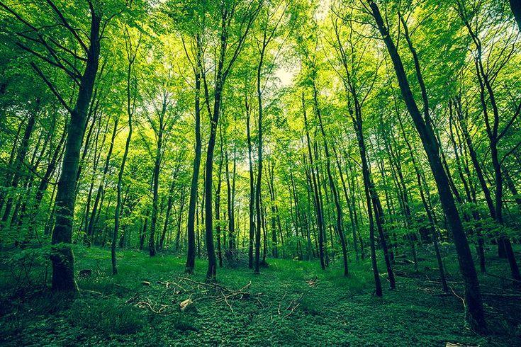 """Kasper Nymann on Twitter: """"Green forest. https://t.co/dEYUkrSF62 #forest #nature #greennature #landscape #denmark #scandinavia #photographer https://t.co/ue21HCGPFI"""""""