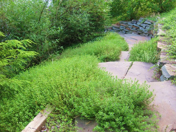 1000 images about landscape ground cover on pinterest for Soil xchange