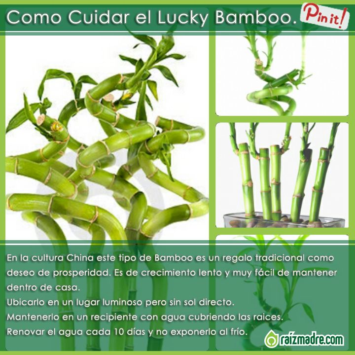 17 best images about consejos tips on pinterest - Cuidados del bambu ...