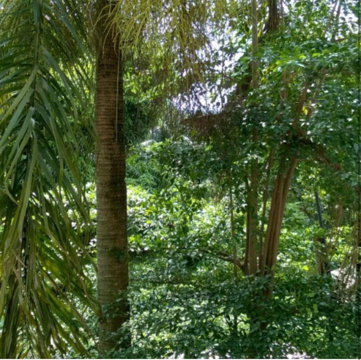 Greenery as shades and natural curtains at the front yard.