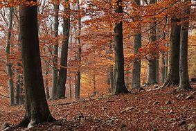Přírodní rezervace Týřov, pohled od Skryjí