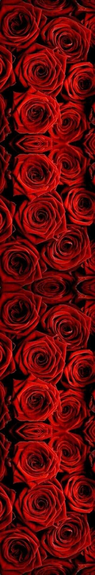 Rouge inspiration - De belles roses rouges pour montrer son amour #rouge #roses #fleurs