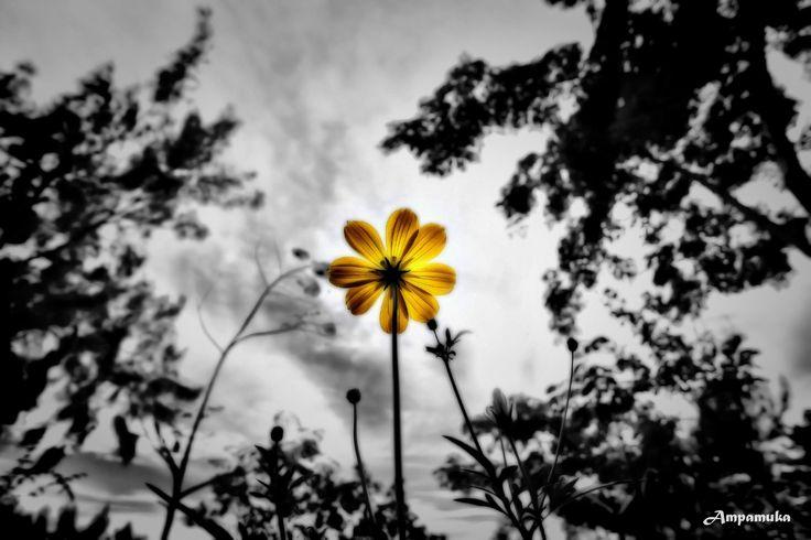 Inspire by Suradej Chuephanich on 500px