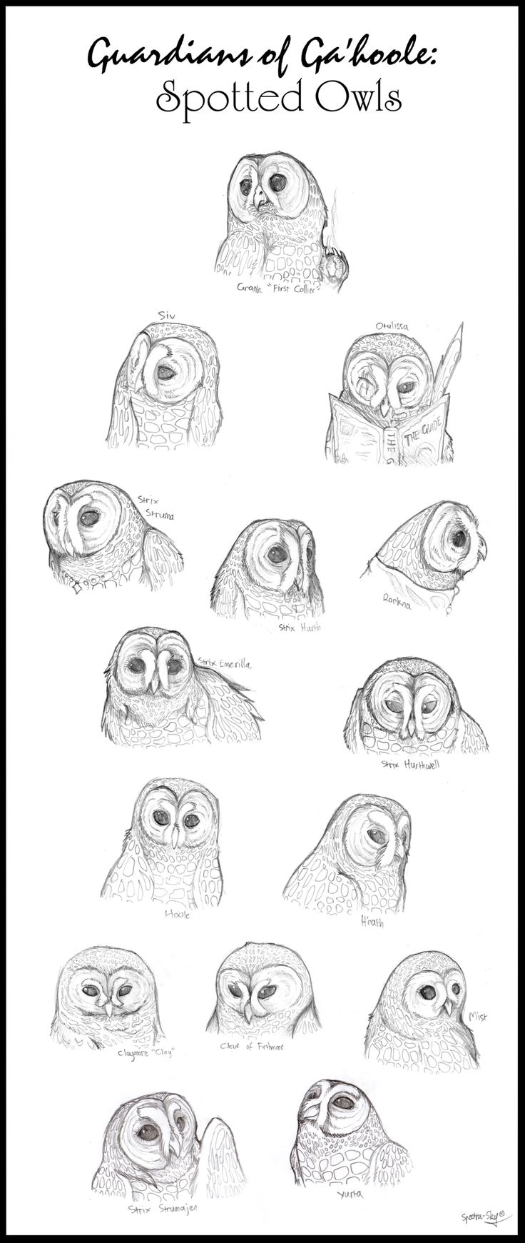 92 best owls of gal u0027 hool images on pinterest owls guardians of