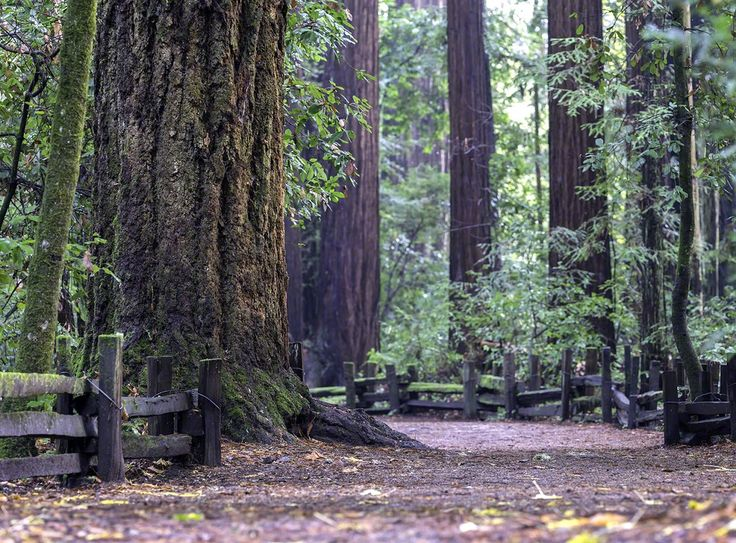 22 Best Henry Cowell Redwoods Sp Images On Pinterest