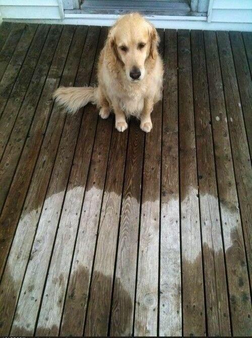 Somebody fell asleep in the rain... poor guy!