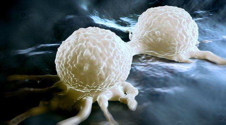 rakovina-bunka-delici