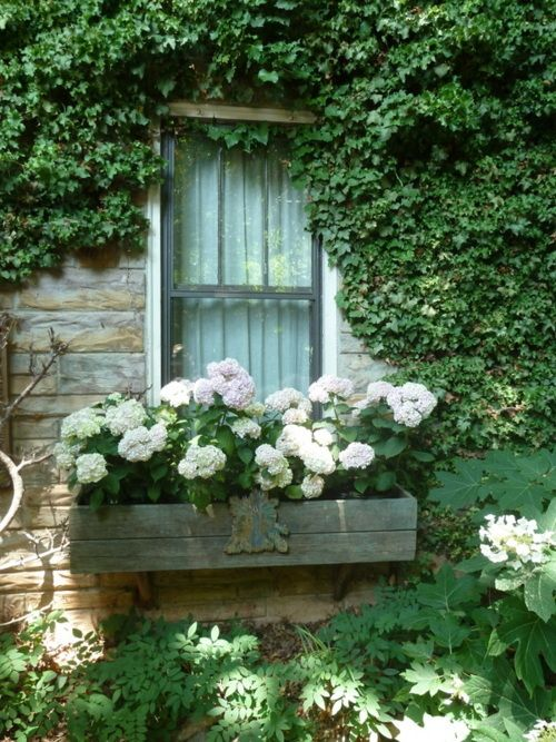window box and ivy covered stone walls