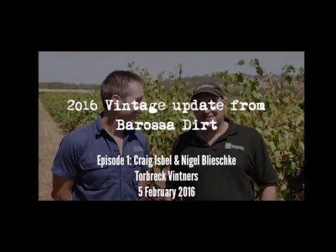 2016 Vintage Updates from Barossa Dirt. Episode 1 Torbreck Vintners. - YouTube