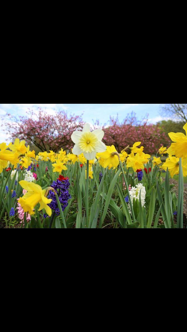 Awesome Saarland Deutsch Franz sischer Garten Saarbr cken Foto wt