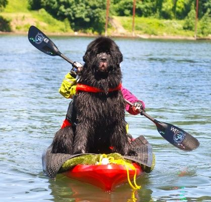Dogs, Kayaking with dogs, Dogs on boats