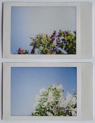 My instax pics / fujifilm instax mini 26 / polaroid  May in Poland / lilac flowers