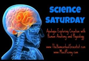 www.thehomeschoolscientist.com...lots of links that correspond with Apologia (Anatomy)