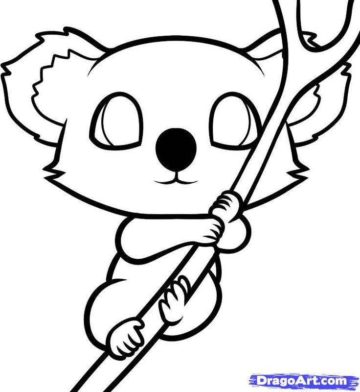 Line Drawing Koala : How to draw a koala for kids step by animals