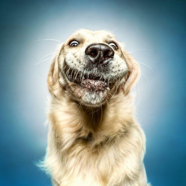 Funny Dog Faces Erblicken Com Funny Dog Faces Dog Face