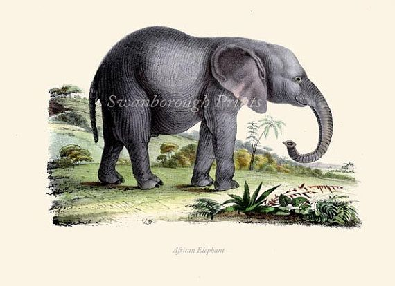 African elephant art print elephant wall art nursery African elephant home decor
