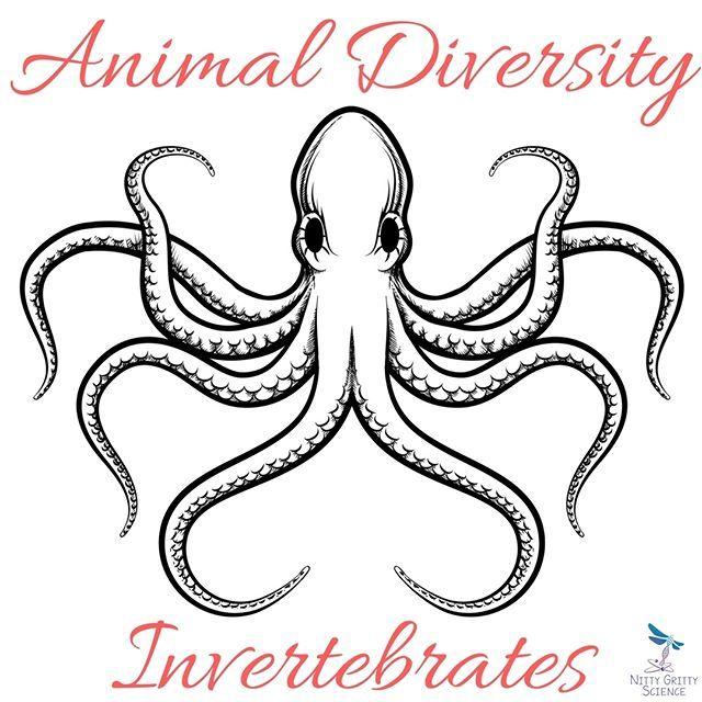 animal diversity invertebrates nitty gritty science instagram octopus illustration. Black Bedroom Furniture Sets. Home Design Ideas