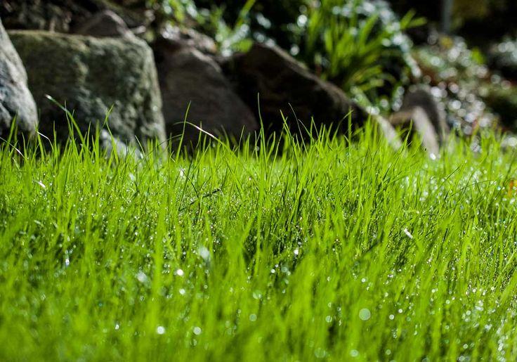 Uusi nurmikko, fresh grass