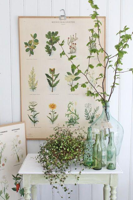 Botanical //