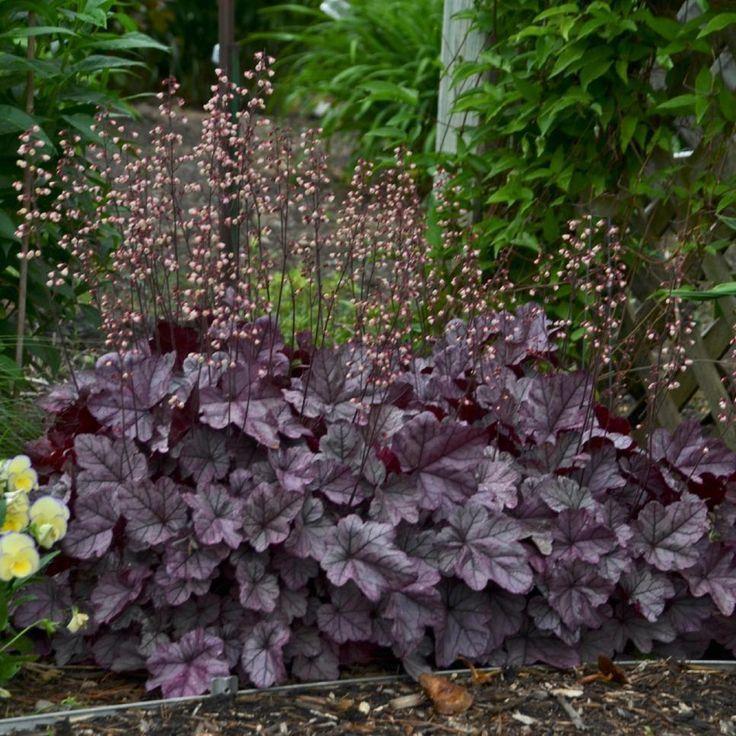 English Garden Shrubs Cottagegardenshrubs Evergreen Shrubs