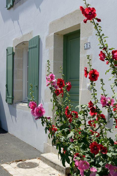 Roses of the Ile de Ré, Poitou-Charentes www.visit-poitou-charentes.com/en/La-Rochelle-Ile-de-Re/Ile-de-Re