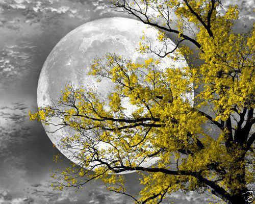 Black white yellow tree moon wall art home interior decor matted picture