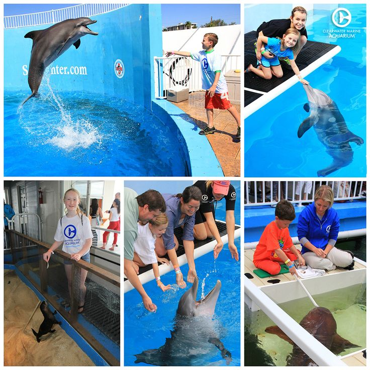 We Offer Many Amazing Animal Encounter Programs At Clearwater Marine Aquarium Check Them All