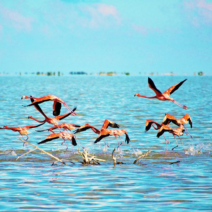 Great Inagua Island, The Bahamas / Остров Большой Инагуа, Багамы