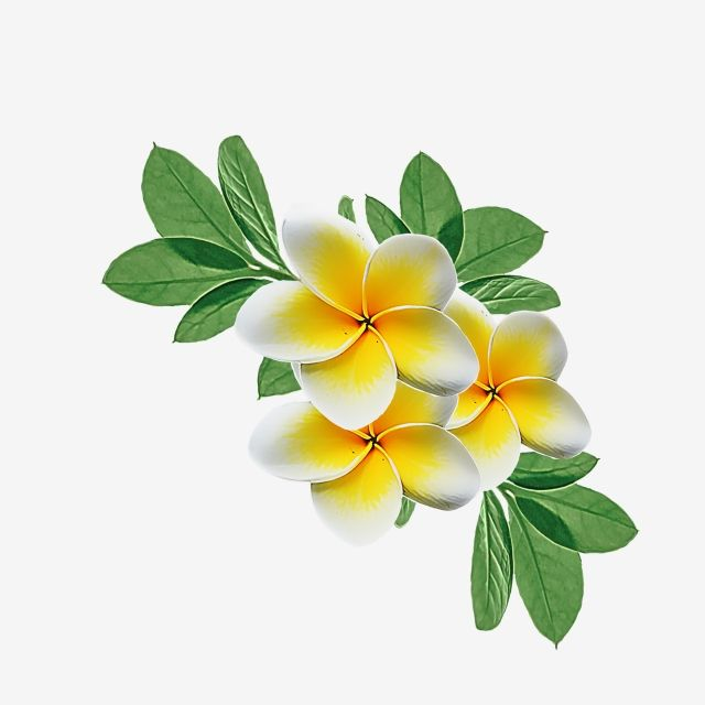 Watercolor Flower Yellow Flowers Png Watercolor Clipart Flowers Flower Png Transparent Clipart Image And Psd File For Free Download Watercolor Flowers Watercolor Flower Illustration Watercolor Flower Background