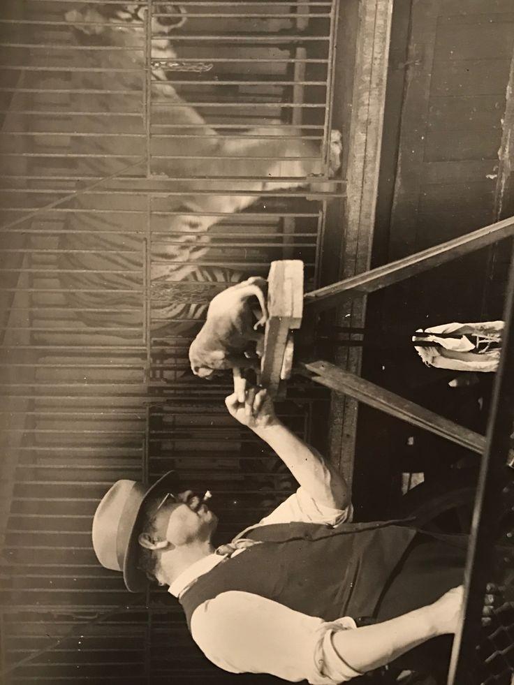 Pallenberg josef , 1882 - 1946.  Originalfoto mit J P bei der Arbeit  im Zoo - von Ferdinand Hartung aus Düsseldorf.