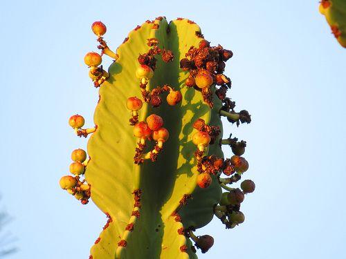154 Plants in the garden at Kuifkopvisvanger
