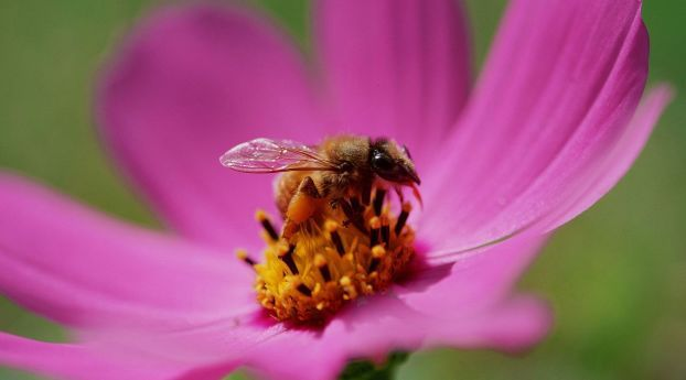 Bee Flower Pollination Flower Pictures Amazing Flowers Bee On