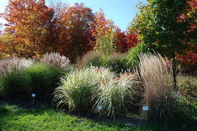Les 174 meilleures id es de la cat gorie grasses sur for Wild ornamental grasses