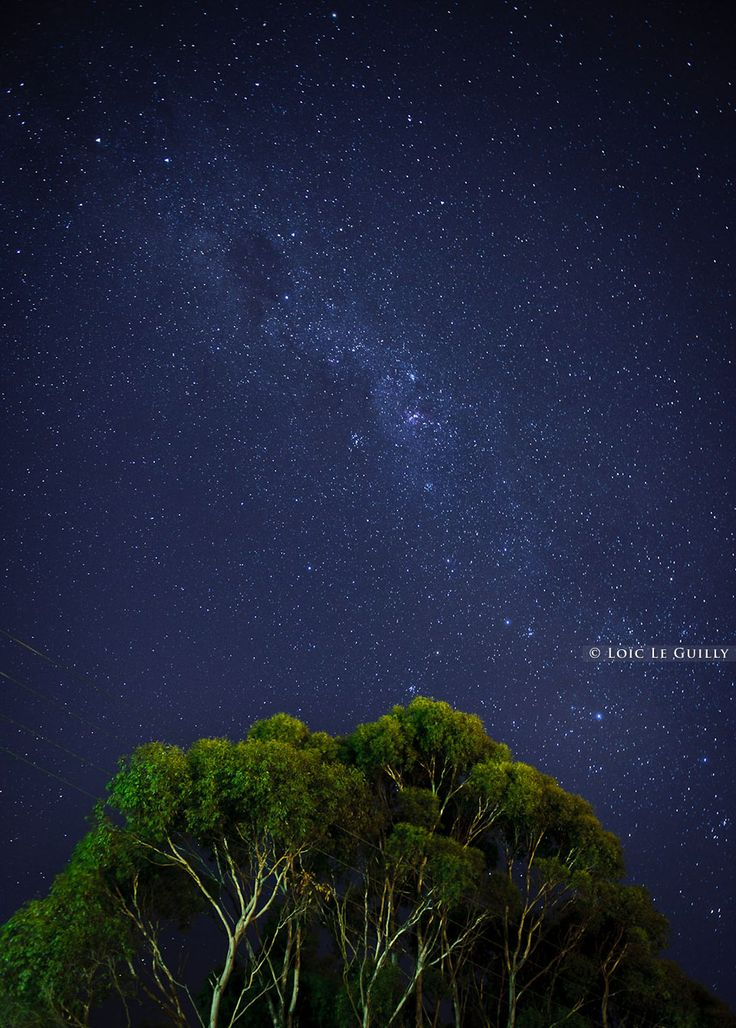 Milky way and eucalypts above Hobart, Tasmania