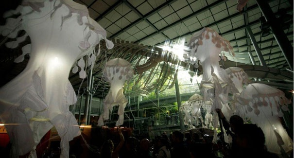 Every Thursday night, music, creatures and cocktails come together for NightLife at the California Academy of Sciences.