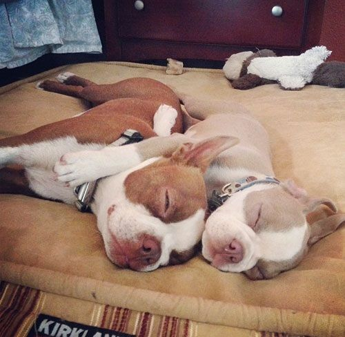 Sleepy Boston buddies