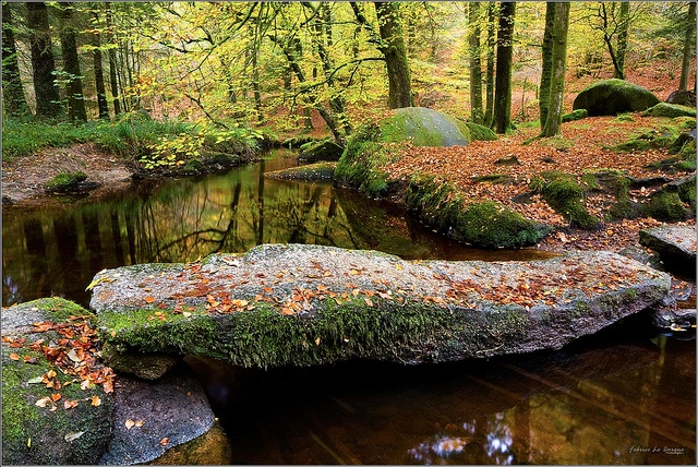 The Forest Of Huelgoat, Finistere by Fabrice Robben on Flickr