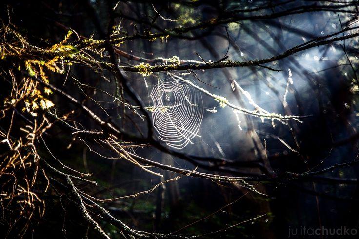 Spiderweb by Julita Chudko on 500px