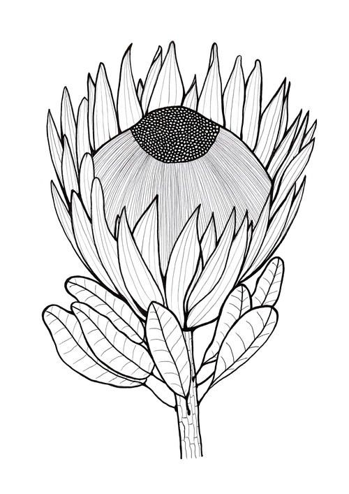 2561 besten flower coloring Bilder auf Pinterest | Malvorlagen ...