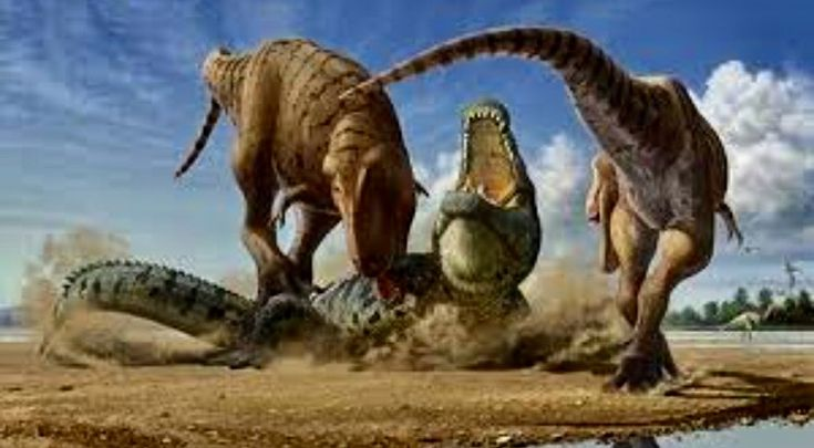 Purussaurus Brasiliensis Alligatorid 233 S Ca 239 Manin 233 S