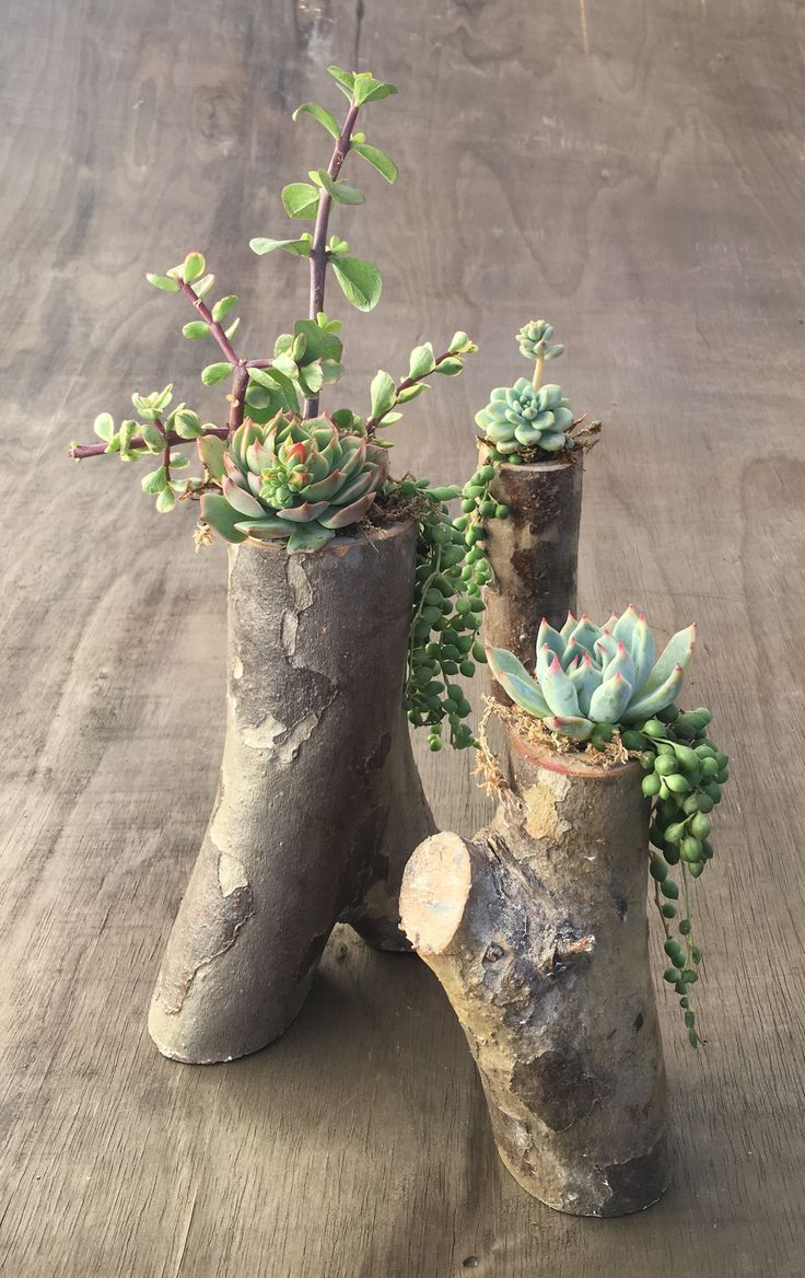 DIY Tree Branch Planters for Succulents