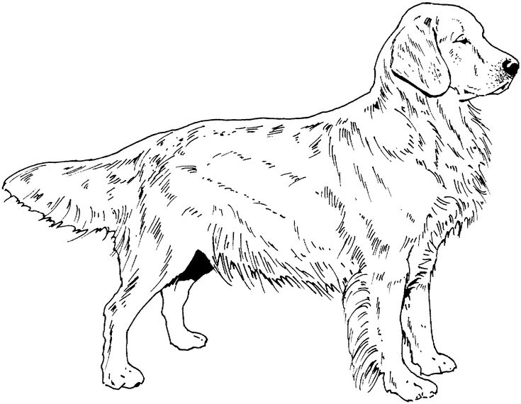 Dog Breed Coloring Pages Find beautiful