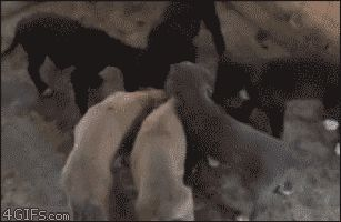 Dog Fails | Funny GIFs of Puppies Falling