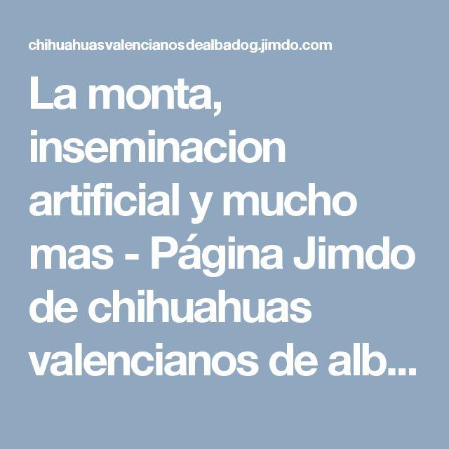 La monta, inseminacion artificial y mucho mas - Página Jimdo de chihuahuas valencianos de alba dog, Criadores de chihuahua, venta de chihuahuas.