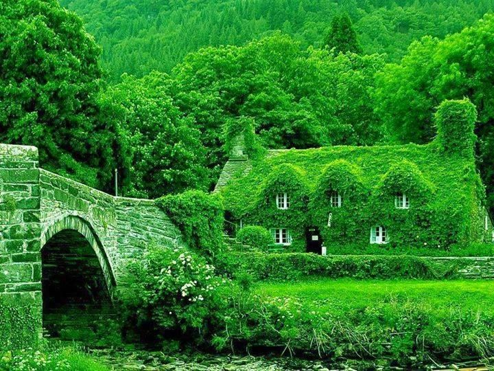 A Green House, literally!