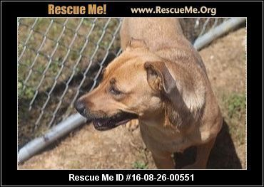 UPDATE:  12/31/2016  Dora is still available for adoption.  ― Tennessee Dog Rescue ― ADOPTIONS ―RescueMe.Org  Dora is a black mouth cur mix who prefers a quiet life, but she is in danger.
