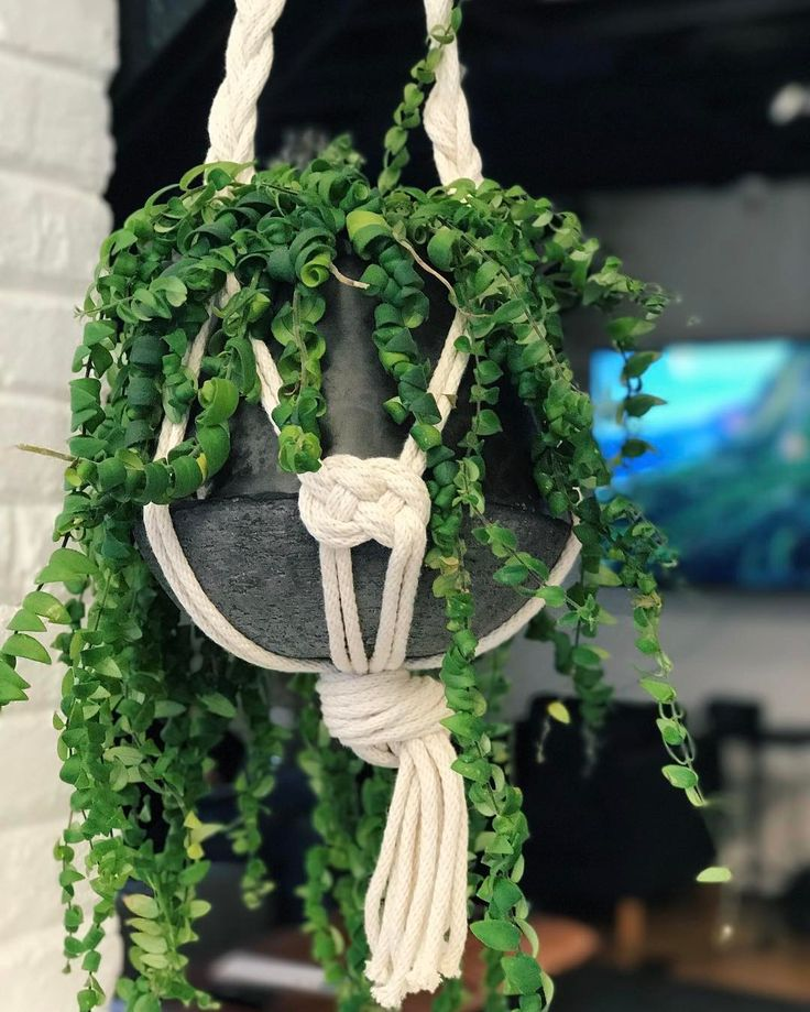 """457 Likes, 10 Comments - Windy Chien (@windychien) on Instagram: """"Macrame plant hangers are among the first objects a beginner makes. I don't do them often but…"""""""