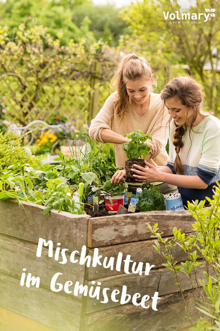 Mischkultur Im Gemusebeet Anlegen Plant Happy Mischkultur Pflanzen Bepflanzung