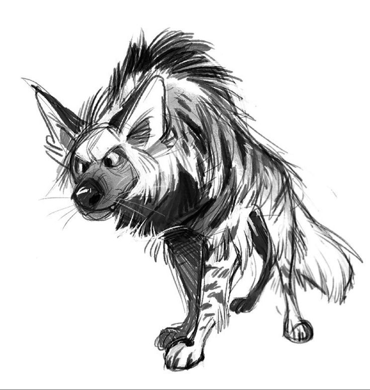 Striped hyena!!